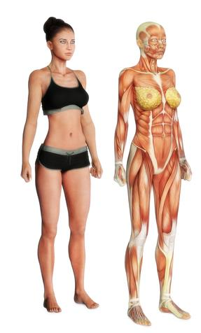This pic has a comparision of woman body with body showing muscles and fat